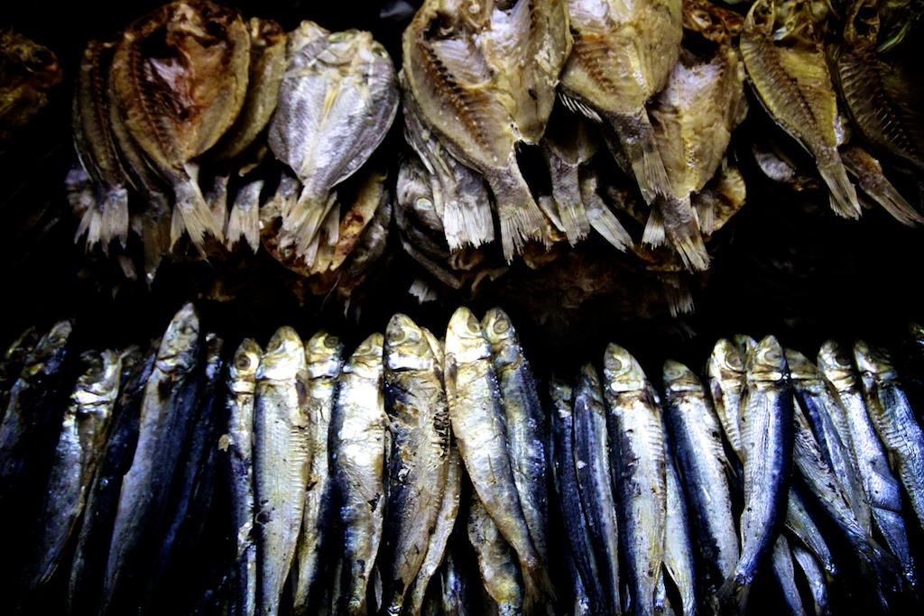 poissons aux philippines