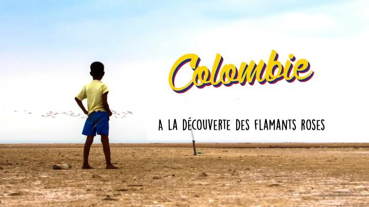Défi 10 : Découvrir et filmer des flamants roses – Colombie