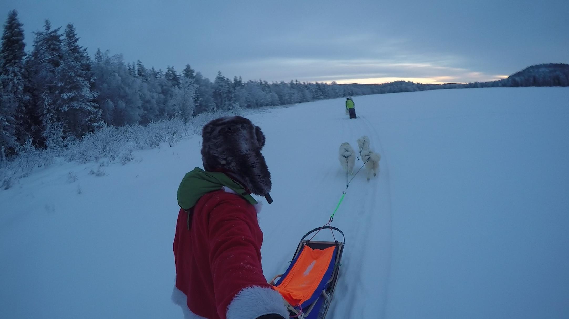 Faire du chiens de traineau en Laponie Suédoise